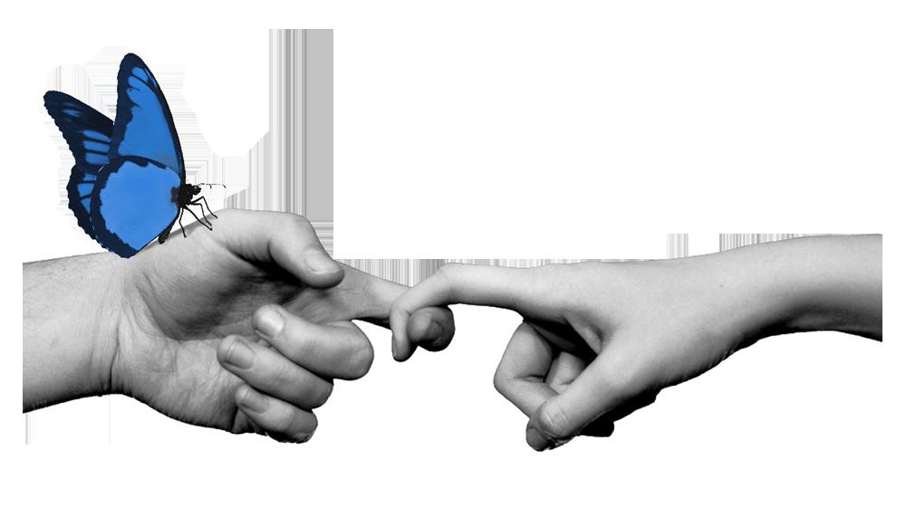 Zdjęcie czarno-białe: dwie dłonie połączone ze sobą za pomocą ułożonych wskazujących palców w hak. Niebieski motyl siedzi na dłoni po lewej stronie.