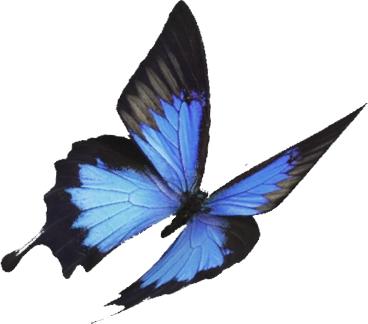 Niebiesko-czarny motyl odlatujący w prawą stronę.